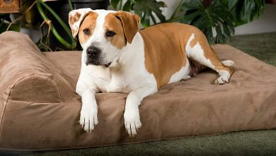 Photo of Top 10 Best Memory Foam Dog Beds in 2020 – Reviews