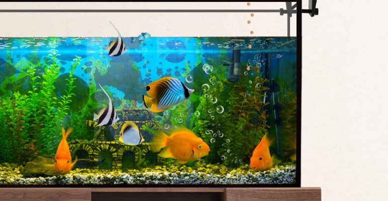 Photo of Top 10 Best Automatic Fish Feeders in 2019 – Reviews