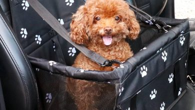 Photo of Top 10 Best Dog Car Seats in 2020 – Reviews