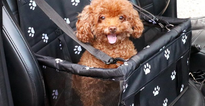 Photo of Top 10 Best Dog Car Seats in 2020 – Reviews 0 (0)