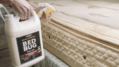 Photo of Top 10 Best Bed Bug Sprays in 2020 – Keep Your Bed Clean with This Spray
