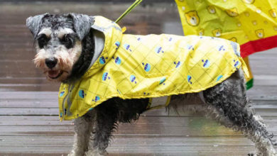 Photo of Top 10 Best Dog Raincoats in 2020 – Reviews