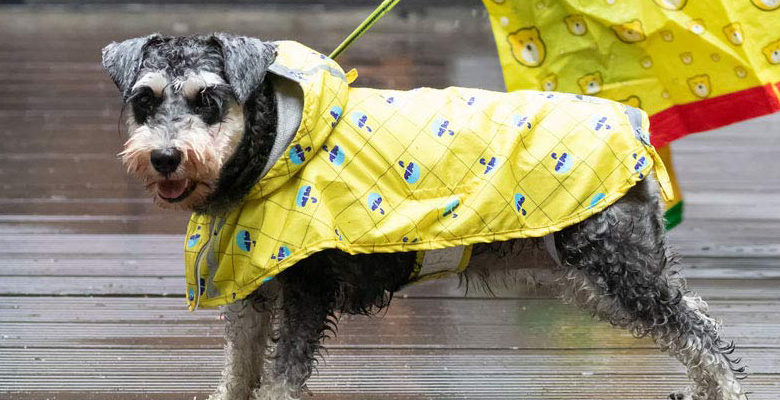Photo of Top 10 Best Dog Raincoats in 2019 – Reviews