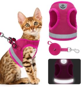 KOOLTAIL Cat, Dog Harness and Leash Set