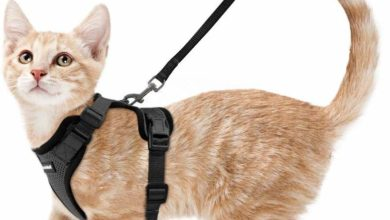 Photo of Top 10 Best Cat Harnesses in 2020 – Reviews