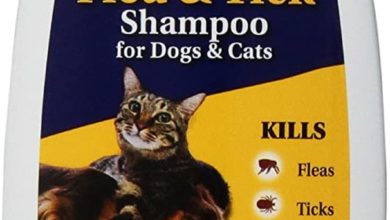 Photo of Top 10 Best Cat Shampoos in 2020 – Reviews | Pets Shampoo