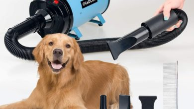 Photo of Top 10 Best Dog Dryers in 2020 – Reviews
