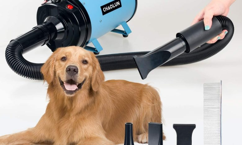 Photo of Top 10 Best Dog Dryers in 2020 – Reviews 0 (0)
